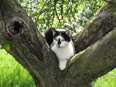Claudia (ute_hartmann) Tags: tree cat claudia katze baum