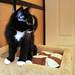 Cunningham - SCAT @ Petsmart Adoption Centre