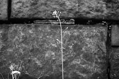 XT1-05-07-15-314-2 (a.cadore) Tags: nyc newyorkcity blackandwhite bw zeiss landscape uptown fujifilm riversidepark uws carlzeiss xt1 biogont2828 zeissbiogon28mmf28 fujifilmxt1