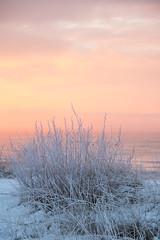 Frosty sunrise (Infomastern) Tags: winter cold sunrise vinter frost rime soluppgng rimfrost kallt skateholm