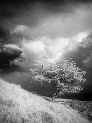 Mennock Wood_1 (Dylan Nardini) Tags: uk trees light sky nature lines clouds ir scotland countryside sanquar infrared shape mennock