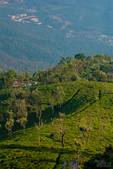 Green Valley (V.T.Arun ram kumar) Tags: world travel trees summer india house green coffee wonder high nikon scenery asia day estate view place outdoor earth path south away best valley lonely far tamil ooty nadu d3000