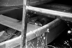 BEDROOM (Dinasty_Oomae) Tags: blackandwhite bw monochrome cat blackwhite kodak outdoor chiba  retinette ichikawa
