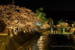 / Cherry Blossoms at night in Hida Takayama (kimtetsu) Tags: bridge japan spring nightshot jp  cherryblossom  takayama  gifu