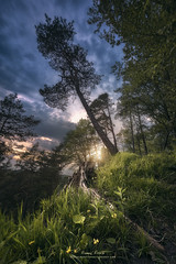 The Hidden Kingdom (Manuel.Martin_72) Tags: flowers trees sunset grass leaves fairytale clouds landscape switzerland evening spring woods nikon outdoor hills zrich sunrays dramaticsky forests enchanted ch winterthur d810 manuelmartin promoteremotecontrol wwwmanuelmartinphotographycom
