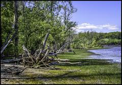 Dead Tree by Hudson (jsleighton) Tags: sky tree river landscape dead waterfront shoreline roots driftwood hudson