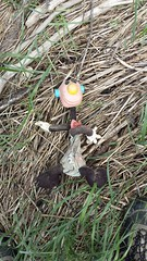 20160624_113535 (Keep Wales Tidy) Tags: bridge summer up coast marine severn clean litter learning monmouth welsh care baccalaureate caldicot rogiet welshcoastalpathcleanup
