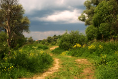 Перед дождём (constantine_fedoroff) Tags: 35mm nikon nikkor afs dx d80 f18g naturebynikon