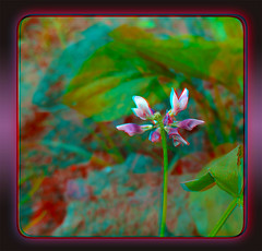 An Ugly Clover Bloom - Anaglyph 3D (DarkOnus) Tags: flower macro closeup stereogram 3d weed phone pennsylvania cell 8 anaglyph stereo ugly bloom mate clover stereography buckscounty huawei darkonus