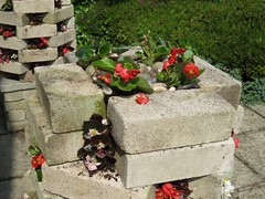 1837 Baby Begoina Hi-rise planters replanted (Andy panomaniacanonymous) Tags: 20160608 babybegoina bbb frontgarden gardening ggg hhh hiriseplanter pink planting ppp red rrr