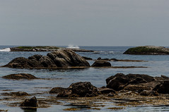 _DSC6693.jpg (newminaswilders) Tags: ocean ca canada nature novascotia portjoli
