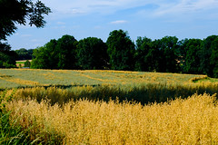 20160724-DSCF0983 (Captivating_Colors) Tags: outdoors outdoor outside nature naturephotography naturelover fuji fujifilm xt1 fujixt1 fujifilmxt1 fujixseries fujifilmxseries fujifeed vlaamseardennen vlaamse ardennen 2016 summer vlaanderen flanders belgium vividsimulation vivid landscape landscapelover scenery view rustic scene landscapephotography sky skyporn skylover skylovers cloud clouds cloudporn cloudlover cloudlovers skyline country countryside grassland field plant grass plain