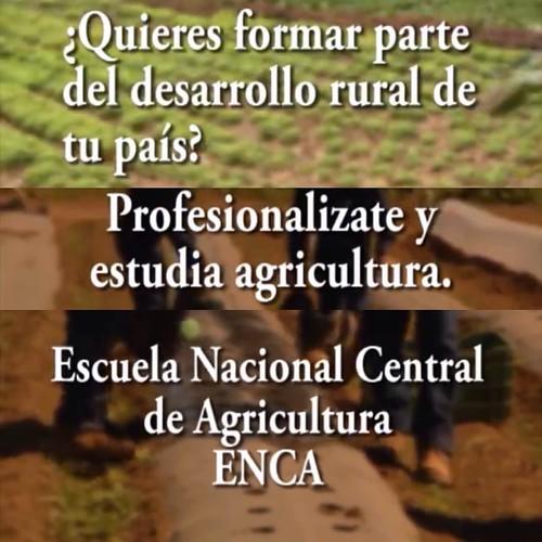 ¿Quieres estudiar agricultura? Todos los jueves conoce acerca de la educación agrícola en Guatemala.  #EstudiosAgro #ENCA #MAGAhttp://youtu.be/O_-VgVBaLok