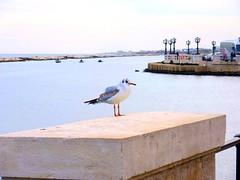 Angry bird (AntoSara) Tags: gabbiano lungomare porto bari bird sea