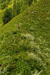 Miranjani: Up the ridge (Shahid Durrani) Tags: miranjani nathiagali hike