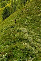 Miranjani: Up the ridge (Shahid Durrani) Tags: miranjani nathiagali hike