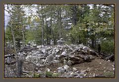 born to be wild (zawaski) Tags: alberta natural canada dogs 2035mm inuckcuk beauty zawaski2016 finephotography mountains calgary fallstarting ambientlight clouds canonef2035mmf3545usm