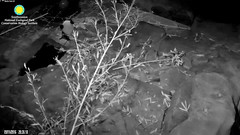 2016_09-11g (gkoo19681) Tags: beibei relaxing nightboo adorableears toocute goodnight ccncby nationalzoo