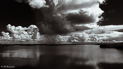Sanibel (PJ Resnick) Tags: pjresnick perryjresnick pjresnickgmailcom pjresnick black light fuji fujifilm noir atmosphere atmospheric white texture angle shape detail fujinon xf rectangle rectangular resnick xpro2 fujifilmxpro2 water waterfront harbor outdoor lowlight drama reflection sky cloud 16mm fujinonxf16mmf14 16mmf14 sanibel sanibelfl jndingdarlingnationalwildliferefuge trees acrosr fujiacros bw blackandwhite monochrome monochromatic clouds 16x9 dramatic acros