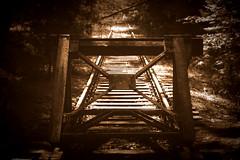 Endstation (floschn84) Tags: schienen bahngleise prellbock ende stillgelegt sepia 2016 berlin spandauerforst sonne lichtundschatten wald