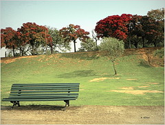 Quinta da Boa Vista (o.dirce) Tags: banco jardim garden quintadaboavista riodejaneiro brasil odirce