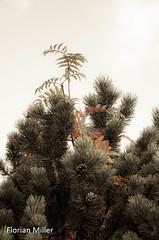 Leaves turn orange (Florian Miller) Tags: 2014 hss