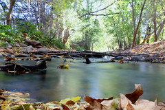 all things merge into one (gebodogs) Tags: autumn arizona fall water leaves creek flow quote sedona waters flowing oakcreek ariverrunsthroughit buddhabeach