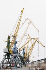 Cranes (alexander.alechits) Tags: russia cranes khabarovsk riverport canoneos7d