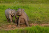 Sitting Elephant in Khao Yai national park (tontantravel) Tags: park wild elephant asian thailand sitting indian national sit elephants wilderness maximus asianelephant khao asiatic yai elephasmaximus indianelephant khaoyai asiaticelephant wildelephant elephas indianelephants khaoyainationalpark asianelephants asiaticelephants wildelephants sittingelephant tontantravel tontantravelcom