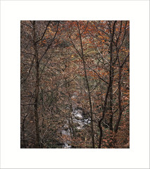 Padley Gorge (Marc.Elliott) Tags: workshops landscapephotography marcelliott