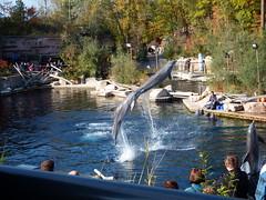 Delfine (MarWen26) Tags: wasser tag delfin sonnig sprung nrnberg suger