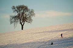 Happy Days...... (klythawk) Tags: nottingham blue winter red brown sunlight white snow black kids clouds december shadows olympus panasonic blueskies happydays lonelytree omd sledging em1 calverton 100300mm klythawk