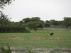 Botswana Hunting Safari 57