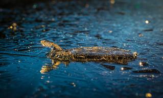 The Ice Turtle