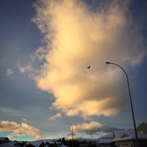 Towering cloud catches winter sunset light  #yxy #Yukon