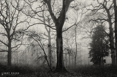 Motionless (Andy Hough Photography) Tags: wood trees england mist nature misty forest woodland blackwhite oak mood moody unitedkingdom branches sony dorchester arboreal southoxfordshire a99 sonyalpha andyhough earthtrust slta99v littlewittenhamwood andyhoughphotography