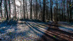 snow and light capler woods (IanbPhoto) Tags: light snow woods jan sony small sigma spattering 2015 a700 18250 capler