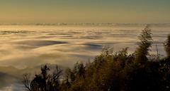 DSC_4147~1 Sea of clouds at Da Lun Mountain - Nantou (michaeliao27) Tags: sea mountain clouds  da lun nantou