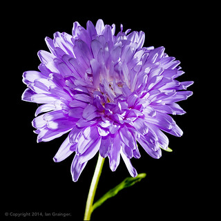 80/100 - Aster