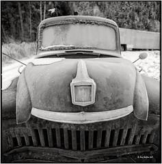 Don´t bite_Hasselblad (ksadjina) Tags: winter 6x6 film analog austria blackwhite scan oldtimer rodinal tyrol haiming hasselblad500cm silverfast kodak100tmax nikonsupercoolscan9000ed carlzeissdistagon40mmf14 oiler69