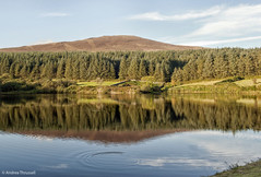 Ripples and Reflections (manxmaid2000) Tags: blue trees lake reflection green water pine landscape natural outdoor ripple calm reservoir serene birch larch isleofman manx