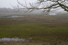 Fog on the Salt Marsh (brucetopher) Tags: wet water rain weather fog estuary marsh saltmarsh damp drizzle drizzling wetweather