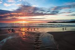 bombas-0064 (iedafunari) Tags: santa praia brasil mar barco gaivotas catarina amanhecer bombas canoa bombinhas