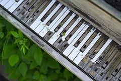 Keys in the garden (Eric Flexyourhead (shoulder injury, slow)) Tags: old city urban canada detail abandoned rotting vancouver zeiss garden keys keyboard bc britishcolumbia piano worn weathered strathcona patina fragment 55mmf18 strathconacommunitygardens sonyalphaa7 zeisssonnartfe55mmf18za