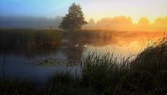 sunrise (2) (MarcelXYZ) Tags: morning lake water sunrise canon scenery swans drohiczyn cesarz marcelxyz