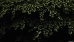 (atacamaki) Tags: nature rain japan  fujifilm 169   f3556 xt1 18135mm  jpeg atacamaki