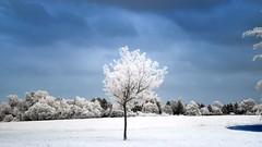 tree-ir (Yasmine Hens) Tags: tree landscape ir nikon europa flickr belgium ngc infrared arbre namur hens yasmine wallonie 720nm infrarouge nikond90 iamflickr flickrunitedaward hensyasmine