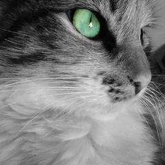 Eco (Melitza T.) Tags: verde azul cat gato felinos eco mamiferos