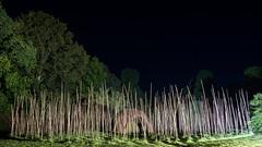 DSC05464 (regis.verger) Tags: temple zen nuit parc nocturne asiatique vgtal maulvrier