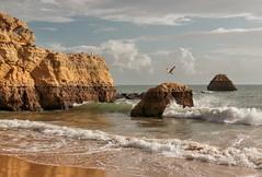 Heaven on Earth (Behappyaveiro) Tags: algarve praiadarocha beach seagulls europa portugal atlanticocean sea blue ocean water summer rock cliff fly wave
